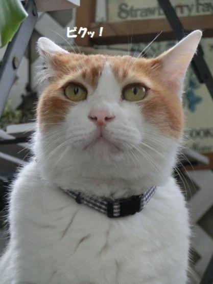 ビクっとした猫
