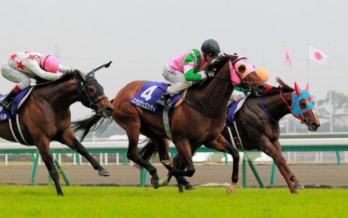 高松宮記念2015回顧。各馬の敗因、勝因は?