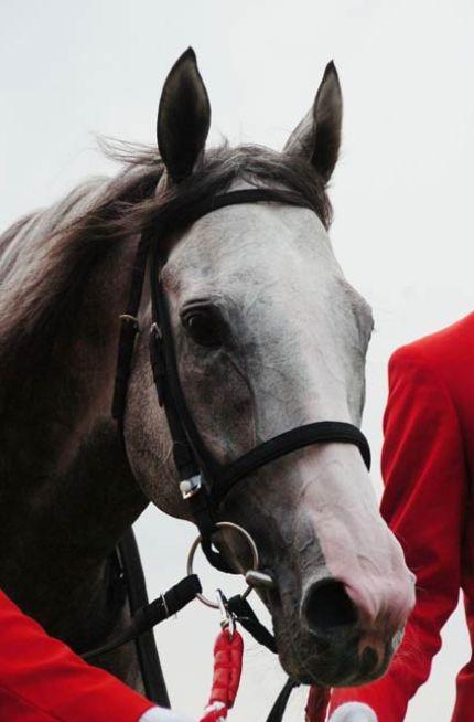 宝塚記念2015予想!調教がいい馬は?悪い馬は?