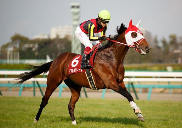 神戸新聞杯2015予想オッズ。リアルスティールは買いか切りか?