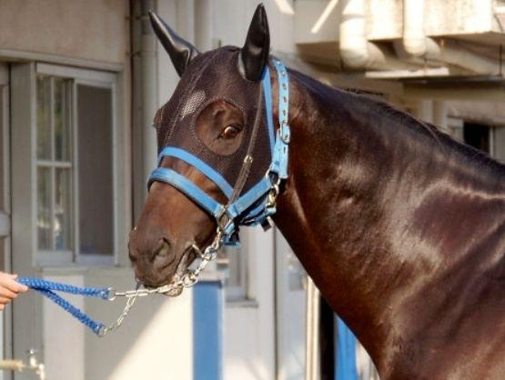 スプリンターズS2015調教チェック!プラス評価はどの馬?