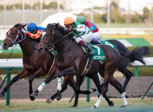 京都金杯2015予想オッズ!軽ハンデの穴馬を狙う。
