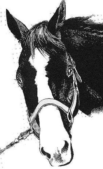 中山牝馬S2016予想!大穴メイショウスザンナの一発狙い!