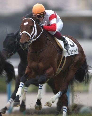 安田記念2016調教チェック!メイチ馬、イマイチ馬は?