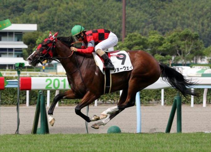 阪神JF2016調教チェック!状態メイチ馬はこの馬だ!