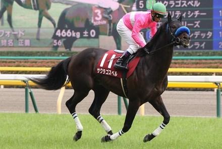 阪神C2016大穴予想!有馬記念の軍資金をココで!