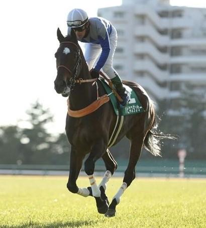 中山牝馬S2017大穴予想!軽ハンデ+調教絶好馬を狙う。