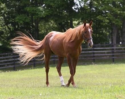 休み明けの馬のデータ分析。勝率・複勝率・回収率は?