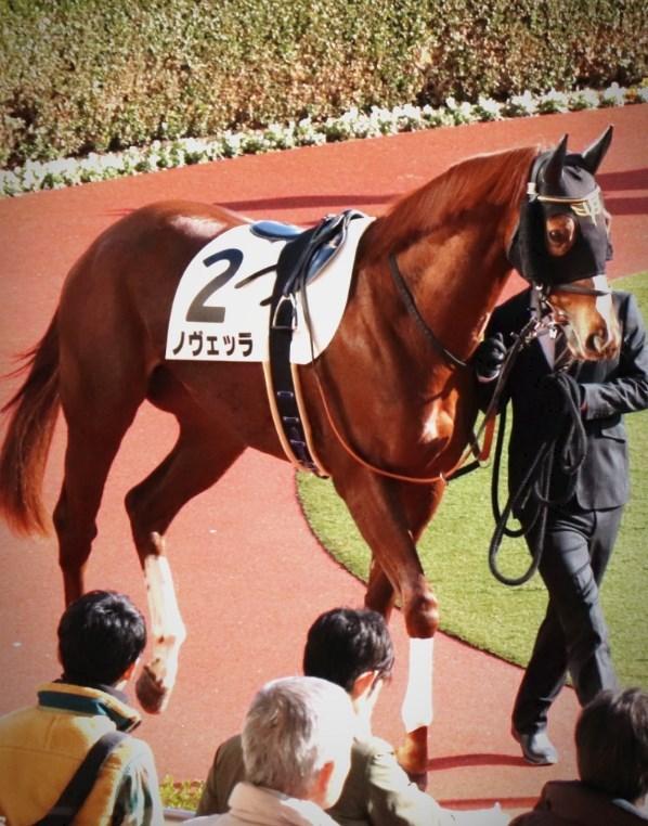 京都牝馬S2019データ分析!大穴馬を探せ!