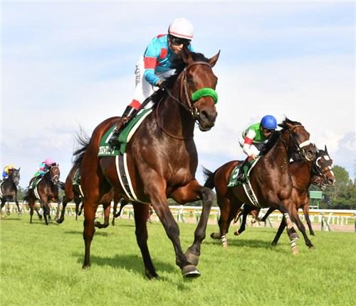 大阪杯2019調教チェック!調教特A評価はこの馬だ!