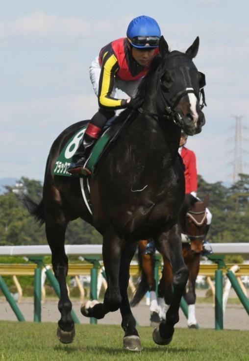 新潟記念2019予想!前残り逃げ馬の大穴を狙う!